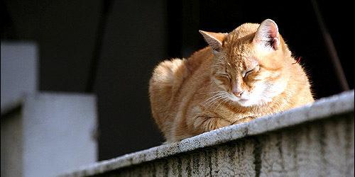 рыжая кошка на балконе