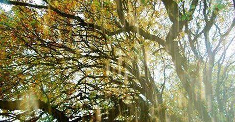 блики солнечного света на деревьях
