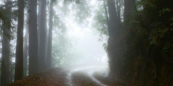 проселочная дорога в лесу