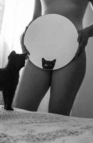 кошка смотрится в зеркало
