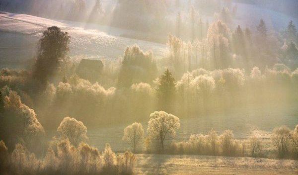 лес в горах, освещаемый солнечными лучами