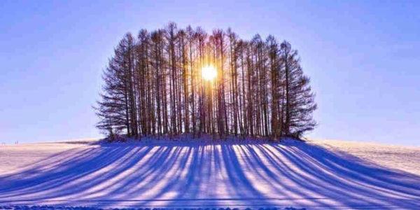 солнечный свет сквозь ветви деревьей
