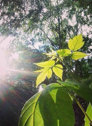 солнечный свет падает на листья дерева