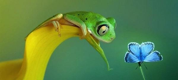 лягушка смотрит на цветок