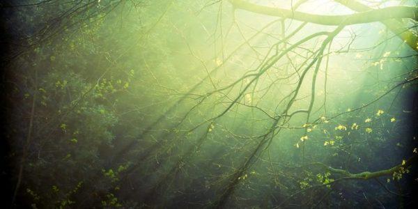 свет едва проникает сквозь мутную зеленую чащу леса
