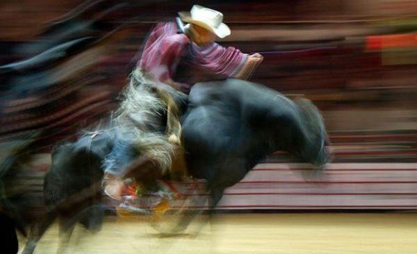 человек скачет верхом на быке